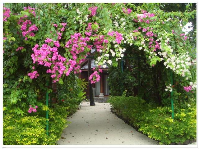 通往沙滩屋的小路,博博客专访活动,马尔代夫,蜜月,沙滩屋