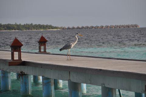 伊瑚鲁岛图片