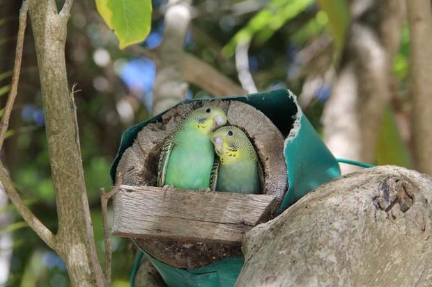 马代有很多相爱的小鸟