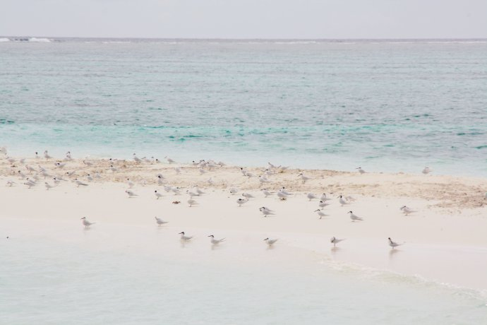 马尔代夫游记(五)岛中漫步