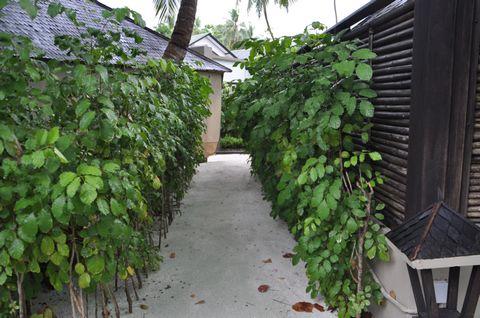 伊瑚鲁岛自助游图片