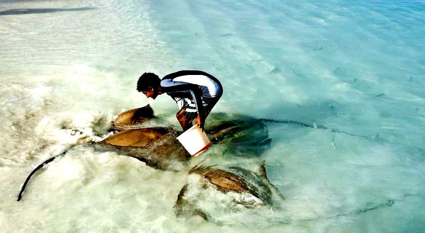 maldives 悦榕庄–瓦宾法鲁岛 Vabbinfaru 漂亮马尔代夫图片相册集