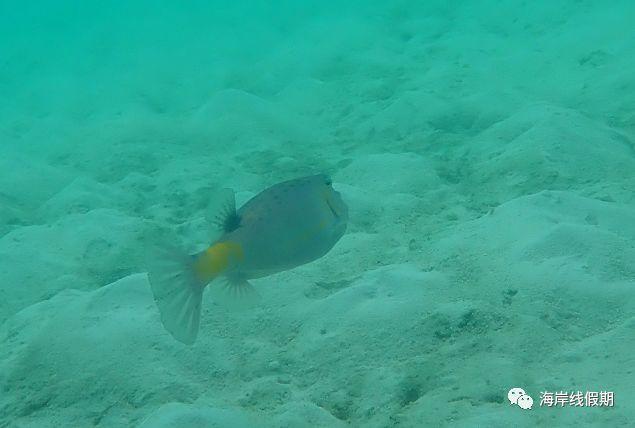 maldives攻略,  科普丨潜水时要注意海洋里面哪些危险的生物? -马尔代夫攻略-一级代理-海岸线假期官网