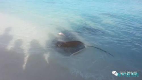 科普丨潜水时要注意海洋里面哪些危险的生物?,马尔代夫游记,海岸线假期